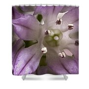 Super Close Up Of A Chive Flower Shower Curtain