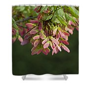 Super Sweet Winged Maple Seeds Shower Curtain
