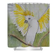 Suphar Crested Cockatoo Shower Curtain