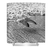 Surf And Wings Shower Curtain