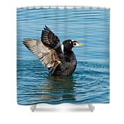 Surf Scotter Male Wings Shower Curtain