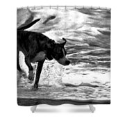 Surfer Bird Shower Curtain