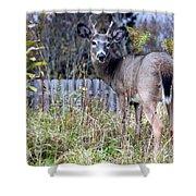 Surprised Deer Shower Curtain