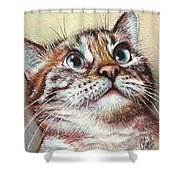 Surprised Kitty Shower Curtain by Olga Shvartsur