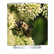 Surrounded By Petals Shower Curtain