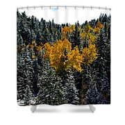 Surrounded Shower Curtain
