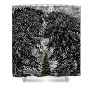 Surrounded Green Tree Shower Curtain
