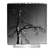 Survival Tree Shower Curtain