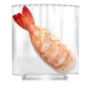 Sushi Cooked Shrimp Shower Curtain