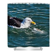 Sushi For Breakfast Shower Curtain