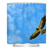 Swainson's Hawk Snake River Birds Of Prey Natural Conservation Area Shower Curtain