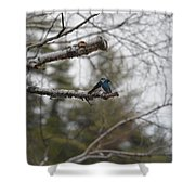 Swallow Discussion Shower Curtain