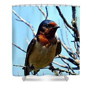 Swallow Glance Shower Curtain