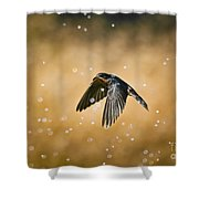 Swallow In Rain Shower Curtain by Robert Frederick