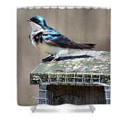 Swallow In The Wind Shower Curtain