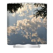 Swallow Reflection Shower Curtain