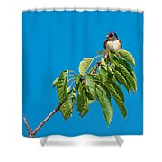 Swallow Sitting On Cherry Tree Branch Shower Curtain