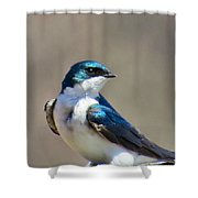 Swallow Stud Shower Curtain