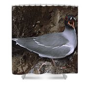 Swallow-tailed Gull And Chick Calling Shower Curtain by Tui De Roy