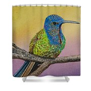 Swallow-tailed Hummingbird Shower Curtain