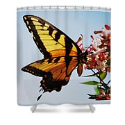 Swallowback Butterfly # 2 Shower Curtain