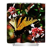 Swallowback Butterfly # 1 Shower Curtain
