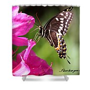 Swallowtail And Azalea - Love Shower Curtain