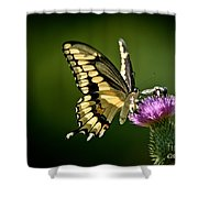 Swallowtail And Friends Shower Curtain