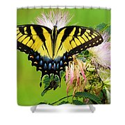 Swallowtail And Mimosa Shower Curtain