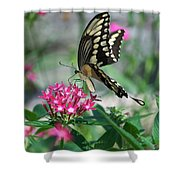 Swallowtail Butterfly 01 Shower Curtain
