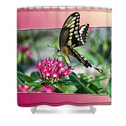 Swallowtail Butterfly 02 Shower Curtain