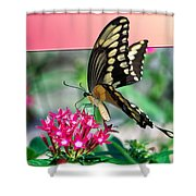 Swallowtail Butterfly 04 Shower Curtain