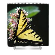Swallowtail Butterfly And Milkweed Flowers Shower Curtain