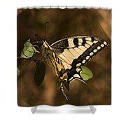 Swallowtail Butterfly Shower Curtain