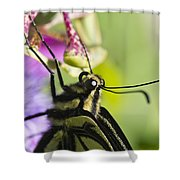 Swallowtail Butterfly Shower Curtain by Priya Ghose