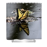 Swallowtail - Butterfly - Reflections Shower Curtain