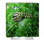 Swallowtail Caterpillar Shower Curtain