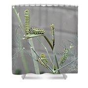 Swallowtail Feast Shower Curtain