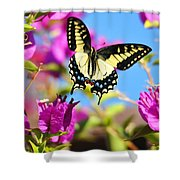 Swallowtail In Flight Shower Curtain