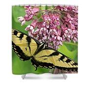 Swallowtail Notecard Shower Curtain