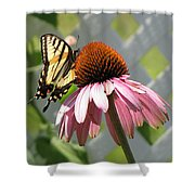 Looking Up At Swallowtail On Coneflower Shower Curtain