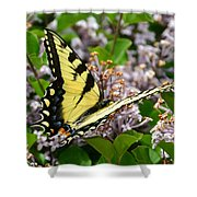 Swallowtail On Lilacs Shower Curtain