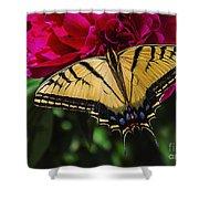 Swallowtail On Peony Shower Curtain
