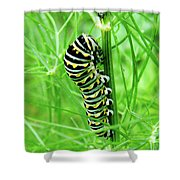 Swallowtail To Be Shower Curtain