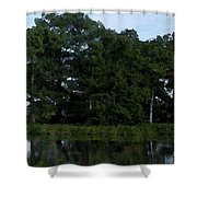 Swamp Cypress Trees Digital Oil Painting Shower Curtain