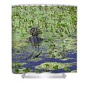 Swamp Gator Shower Curtain