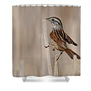 Swamp Sparrow Pictures 17 Shower Curtain
