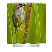 Swamp Sparrow Pictures Shower Curtain