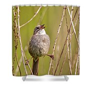 Swamp Sparrow Split Decision Shower Curtain