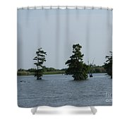 Swamp Tall Cypress Trees  Shower Curtain